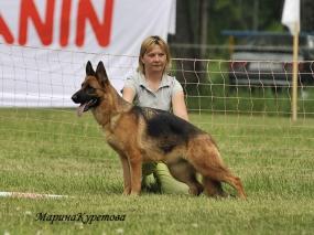 schalke (15)